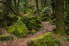 Ścieżka w monumentalnym lesie Sasseto, Lazio, Włochy obrazy royalty free