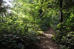 Ścieżka w Nasłonecznionych lat drewnach Zdjęcia Royalty Free