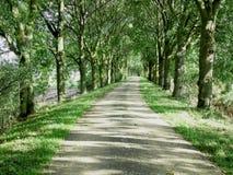 Ścieżka w odzyskującej ziemi Zdjęcie Royalty Free