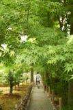 Ścieżka w ogródzie Zdjęcia Stock