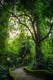 Ścieżka w parkowym Pura Goa Lawah, Bali, Indonezja Fotografia Royalty Free