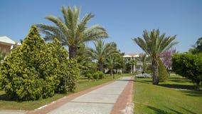 Ścieżka w Parkowym terenie z drzewkami palmowymi ten kiwanie w wiatrze w tła niebieskim niebie zbiory
