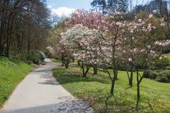 Ścieżka w parku obraz royalty free