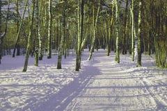 Ścieżka w parku w zimie Obrazy Royalty Free
