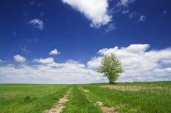 Ścieżka w polach Fotografia Royalty Free