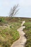 Ścieżka w potarganym drzewie i wrzosowisku Zdjęcie Royalty Free