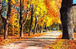 Ścieżka w starym parku w jesieni Obrazy Royalty Free