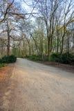 Ścieżka w suchym lesie przy zmierzchem zdjęcia royalty free