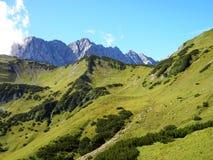 Ścieżka w traw górach, krowach i spiczastych skałach, obrazy royalty free