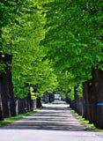 Ścieżka w Zentralfriedhof, Wien Obrazy Stock