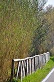 Ścieżka w zieleni Fotografia Royalty Free