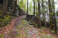 Ścieżka w zielonych górach lasowych Fotografia Stock