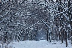 Ścieżka w zima parku Zdjęcie Stock