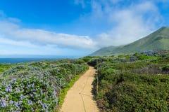 Ścieżka wygina się przez krzaków z dzikimi lilymi kwiatami nad ocean zdjęcie stock