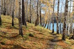 Ścieżka wzdłuż jeziora Zdjęcia Royalty Free