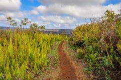 Ścieżka wzdłuż sierry Negra wulkan fotografia stock
