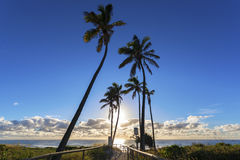 Ścieżka złota wybrzeża plaża zdjęcie stock
