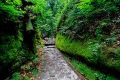 ścieżka zielona Zdjęcia Stock