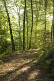 ścieżka zielony las Fotografia Royalty Free