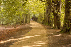 ścieżki 2 drzewa Obrazy Stock