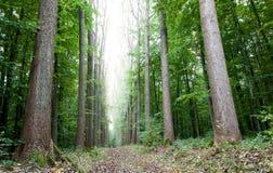 ścieżki drewno Zdjęcia Stock