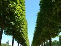 Ścieżki drzewo Zdjęcie Stock