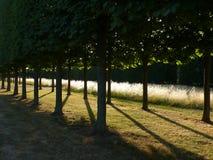 Ścieżki drzewo Obraz Royalty Free