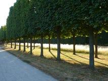 Ścieżki drzewo Obrazy Stock