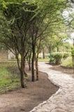 Ścieżki drzewo pionowo Zdjęcia Royalty Free