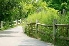 ścieżki lasu zdjęcia stock