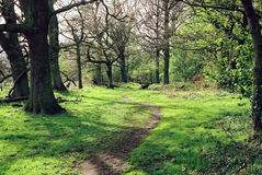 ścieżki lasu Fotografia Royalty Free