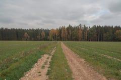 ścieżki lasu fotografia stock