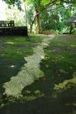 Ścieżki natura w Hatyai i sposób Obraz Royalty Free