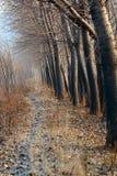 ścieżki prążkowany drzewo Obrazy Royalty Free