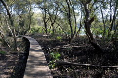 Ścieżki przejście robić drewno wzdłuż błotnistego banka rzeka Obrazy Royalty Free