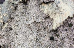 Ścienna tekstura z mech, pękający wybielanie i tynk i Fotografia Royalty Free