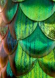 Ścienny Shimmer fotografia royalty free