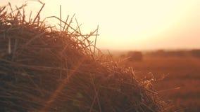 Ścierniskowy pole z słoma belami pod zmierzchem zbiory