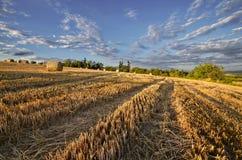 Ścierniskowy pole z słomianymi belami Fotografia Royalty Free