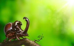 Ściga na gałąź na jaskrawym wiosna dniu zdjęcia royalty free