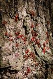 Ścigi czerwieni tło Fotografia Royalty Free