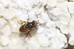 Ścigi, pająki, insekty Zdjęcie Stock