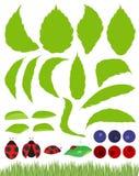 ścigi projekta elementu ilustracyjny liść opuszczać set Zdjęcie Royalty Free
