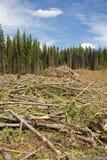 ścigi tnący puszka las zabity obraz stock