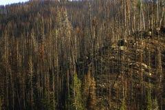 Ścigi zwłoki Bridger Teton las państwowy obraz royalty free