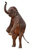 ścinku akrobatyczny słoń zawiera ścieżkę zdjęcia royalty free