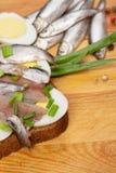 Ściska od solonych sardeli z jajka i wiosny cebulą Zdjęcie Royalty Free