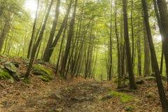 Śladów drewien lato zdjęcie stock