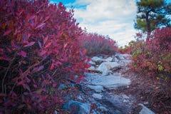 Ślad granit otacza huckleberry ulistnieniem przy Sam punktu prezerwą Fotografia Royalty Free