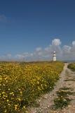 Ślad przez kwiatonośnego koloru żółtego pola piękny li zdjęcia royalty free